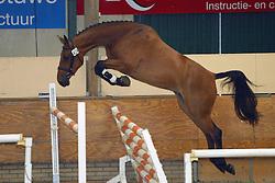 424-Unea<br /> KWPN Paardendagen Ermelo 2004<br /> Photo © Hippo Foto