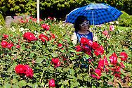 Portland international Rose Test Garden located in Washington Park in downtown SW Portland Oregon