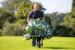 © Licensed to London News Pictures. 13/09/2019. Harrogate UK. Craig Pearson with his winning heaviest Cabbage weighing 27.4kg at the giant vegetable competition at the Harrogate Flower Show in Harrogate today in Yorkshire. Photo credit: Andrew McCaren/LNP