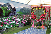 Opium poppy backdrop in a temporary photography studio at the Hmong New Year celebration, Ban Km 52, Vientiane, Lao PDR.