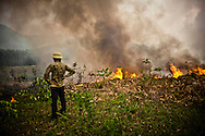 Vietnamese farmer stands on a crop where slash and burn agriculture is practiced, Yen Bai Province, Vietnam, Southeast Asia