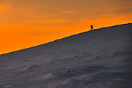 Tourist climbs up a snow mountain hill at sunrise