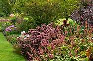 Persicaria and Sedum in a border at Waterperry Gardens, Waterperry, Wheatley, Oxfordshire