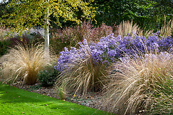Autumn border at Ashwoods with Chionochloa rubra (Red tussock grass) and Aster 'Little Carlow' (cordifolius hybrid)