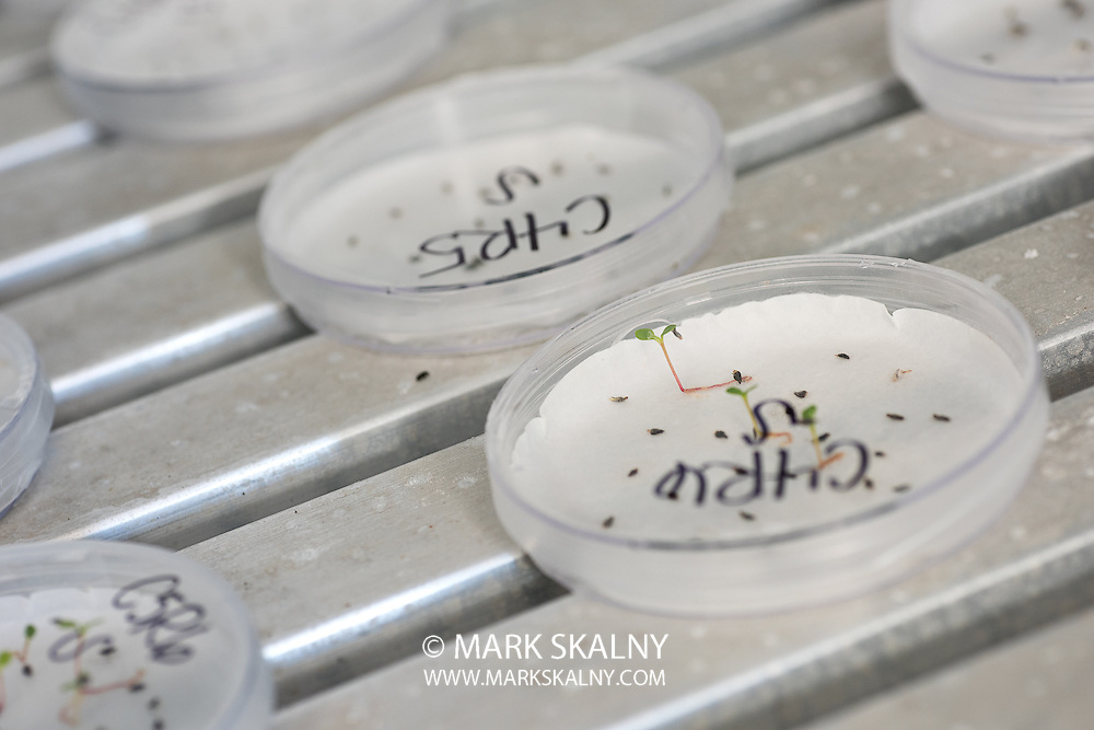 Guayule Plants and Bridgestone Biorubber Process Research Center