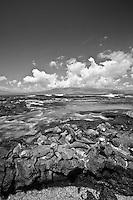 Black and white image of marine iguanas in the Galapagos Islands, Ecuador.