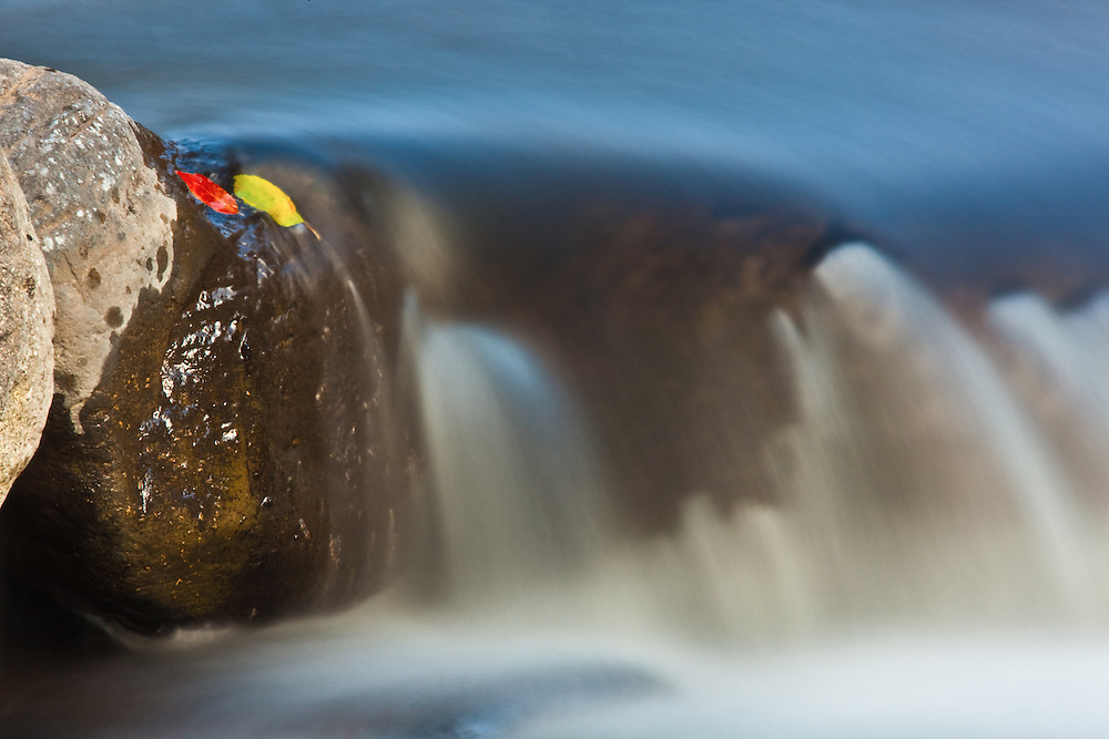 in yosemite valley isolated fall leaves stuck to a rock in a creek during a long exposure shot of a tiny waterfall