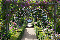 View towards fountain and bench in the rose garden at Mottisfont. Rosa 'Veilchenblau' and Rosa 'Adélaïde d'Orléans' on the arches