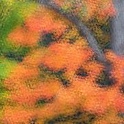 Multiple-exposure montage, in-camera impressionistic effect, peak autumn color in central Ohio woods.