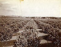 1885 Orange Grove in Hollywood
