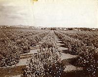 1885 Orange Grove in Hollywood