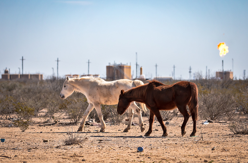 Horses on private land  near an oIl and gas facilities   New Mexico's Permain Basin in Eddy County.