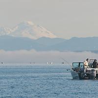 A fisherman reels in a coho salmon under Mount Baker, near Edmonds, Washington.