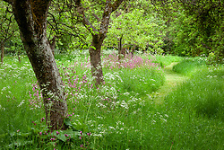 The Orchard at Hidcote Manor Garden with Cow Parsley and Red Campion