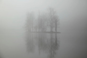 fog over lake with trees on a little island