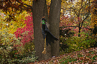 Halloween witch flying through fall foliage.