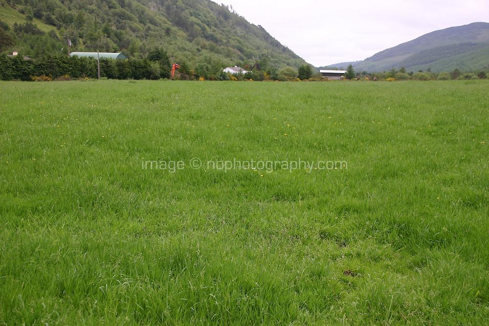 Field in Wicklow Ireland