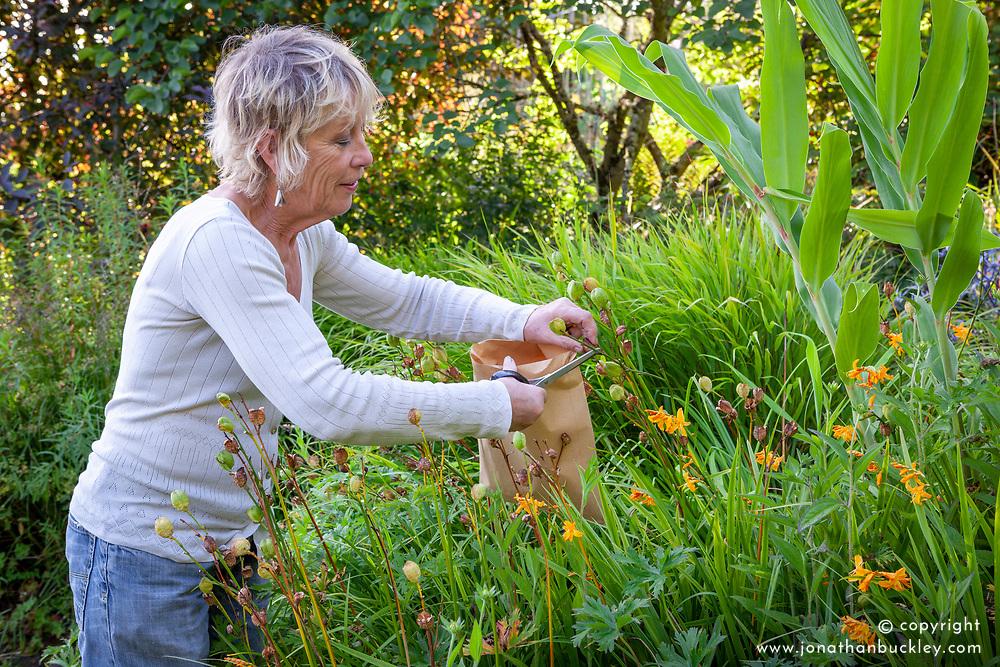 Carol Klein collecting seed from Hemerocallis lilioasphodelus AGM