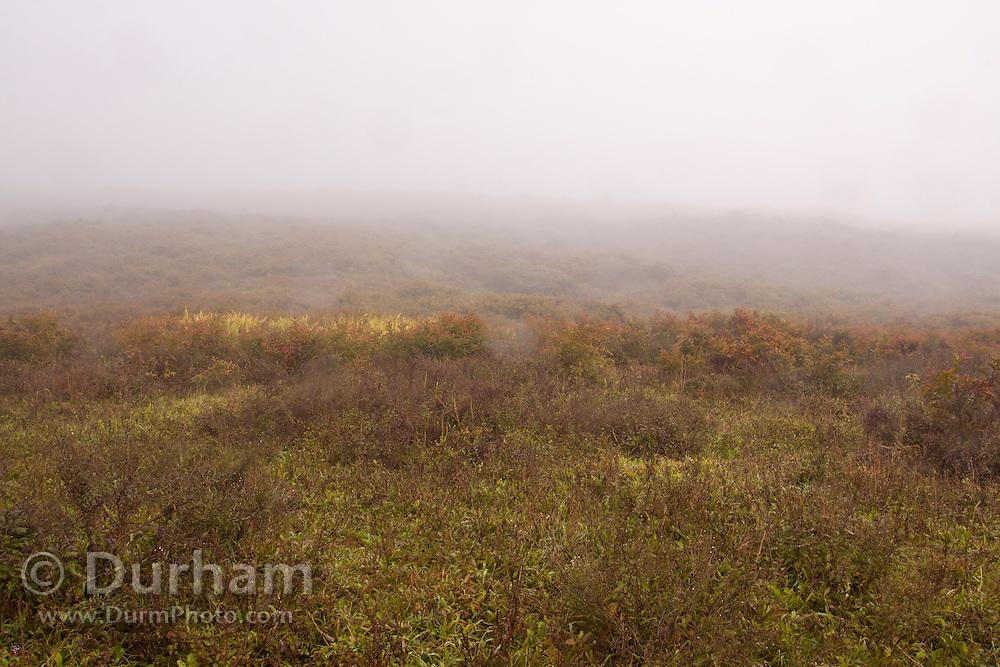 Mist envelopes the landscape along the flanks of the volcano Sierra Negra, Isabel Island, Galapagos Archipelago - Ecuador