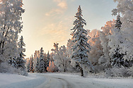 Setting sun illuminates hoarfrost covered  trees lining snow covered road in Southcentral Alaska. Winter. Afternoon.