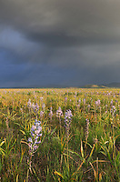 Camas Prairie Idaho