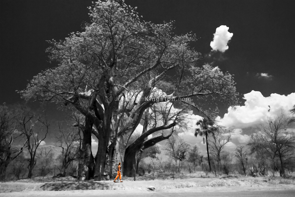 Near Victoria Falls National Park, a young woman examines the enormity of an African baobab tree in the Hwange District of Matabeleland, in the North Province of Zimbabwe. Baobab trees provide many resources for people, animals and other plants, and are surrounded in myth, superstition, and cultural stories. (Model Released)