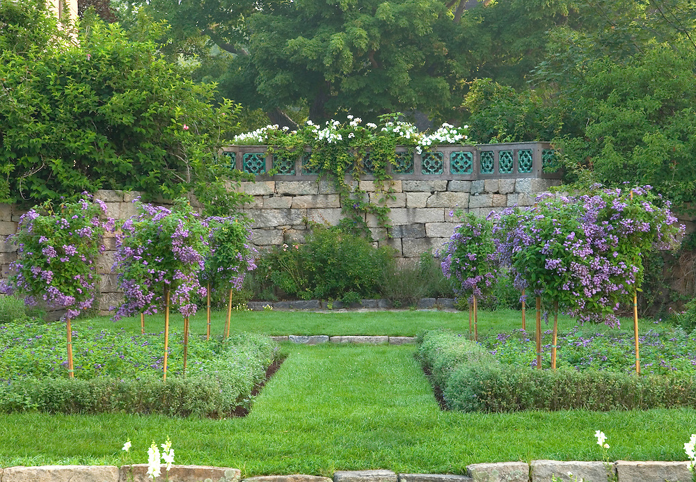 A BEAUTIFUL STONE WALL PROVIDES A STRIKING BACKDROP TO A HELIOTROPE GARDEN