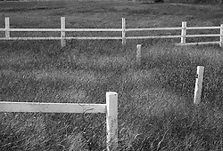 White corral fence in meadow