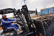 A forklift truck moves a cage of wakame, harvesting wakame at dawn, Awata fishing port, Naruto, Tokushima Prefecture, Japan, February 4, 2012.
