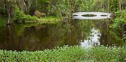 Magnolia Gardens, Charleston South Carolina, Spring, Landscape and water, Spanish moss, Flowers