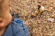 Toddler with a monkey at a petting corner in a children's zoo