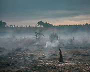 After a first passage of the firefighting brigade, looking at devastation of a pine forest fire on the ground.<br /> Near Bordeaux, France