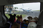 God's Grey's retired racing greyhounds board a charted airplane at Apopka Regional Airport enroute to new homes in the North East on April 05, 2014.
