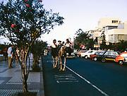 Puerto de la Cruz holiday resort, Tenerife, Canary Islands, Spain, 1974 - camel drawn carriage ride