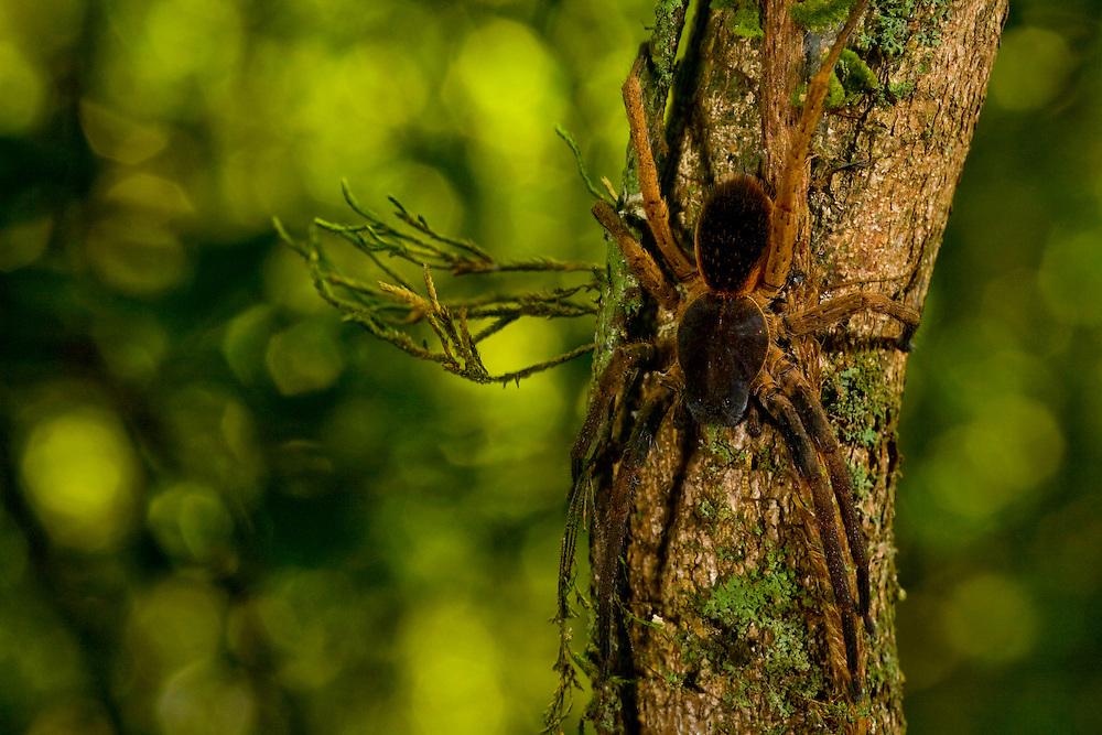 Sao Jose do Rio Preto_SP, Brasil...Programa Biota da Unesp, na foto uma aranha...The Biota program of Unesp, in this photo a spider...Foto: JOAO MARCOS ROSA / NITRO