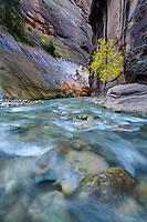 The Virgin River flows through the Zion Narrows as the sun illuminates the canyon walls.