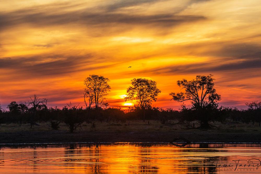 Sunset on the Khwai River, Okavango Delta, Moremi Game Reserve,Botswana, Africa