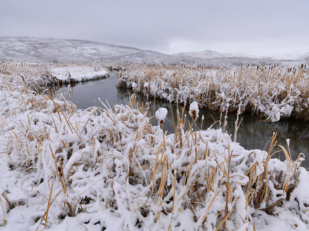 Cattails and fresh snow along Stalker Creek a feeder stream at the Nature Conservancy at Silver Creek near Picabo, Idaho. Licensing and Open Edition Prints
