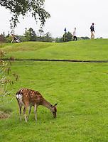 KILLARNEY (Ireland) - Killarney Golf & Fishing Club. Ree op de baan. COPYRIGHT KOEN SUYK