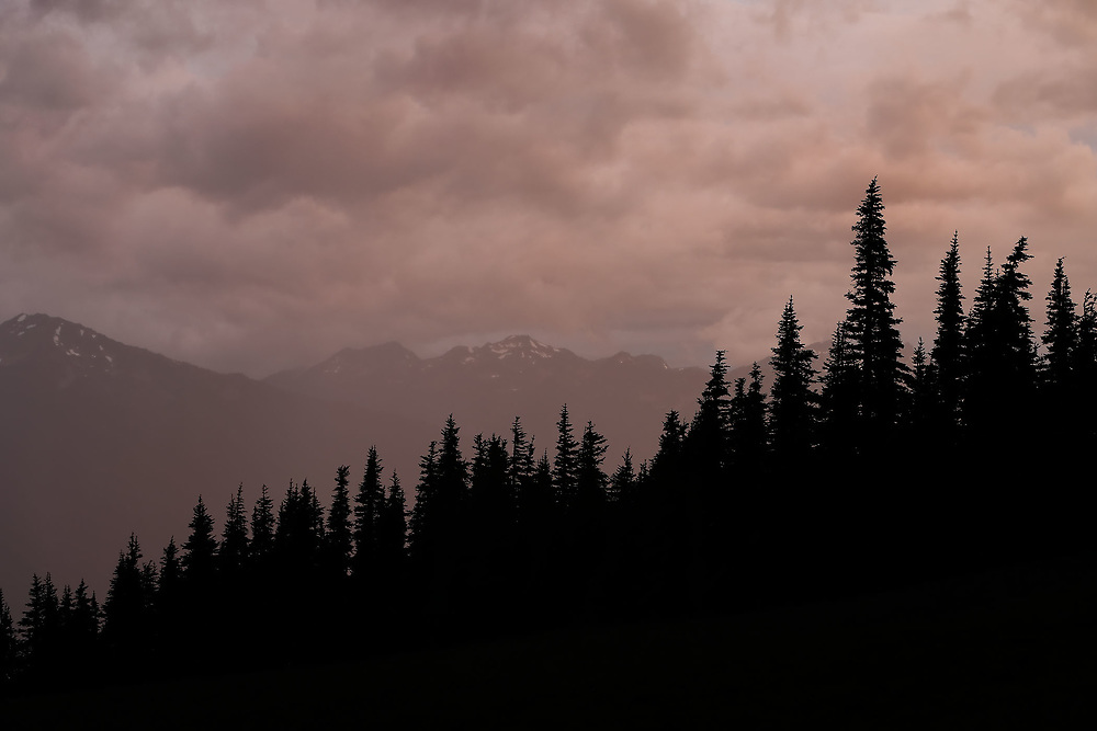 Forest Silhouette and Sunset Light Through Thunderstorm, Olympic National Park, WA