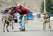 Pulled along on his skateboard, Eric Sweet cruises down Virginian Lane with his Great Danes Moses and Shayna on Friday. The unconventional, green mode of travel is called skatejoring and while popular in other parts of the country, the urban mushing is rarely seen on the streets of Jackson.