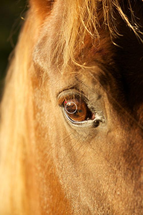Amber Eyed Horse