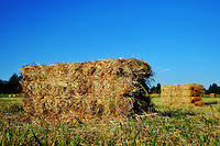 A bale of hay in a field of hay bales against a very blue sky
