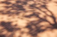 Shadows of a Tamarisk tree in desert sand.