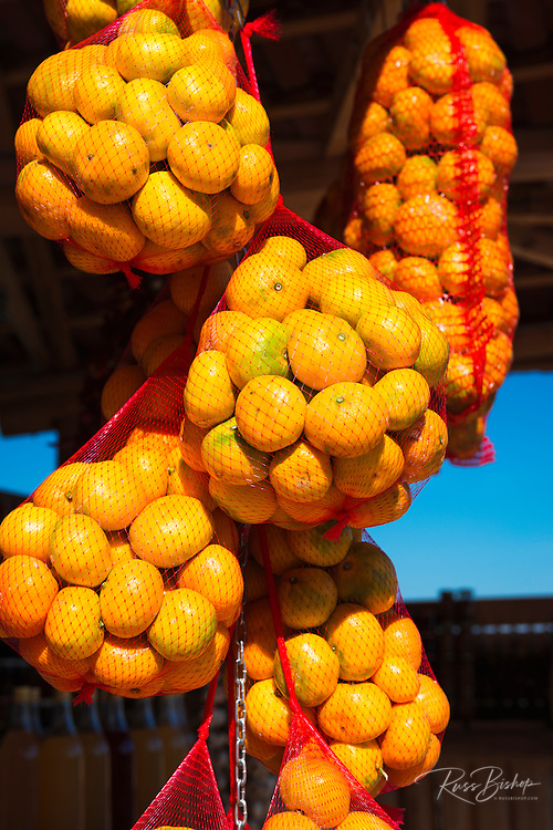 Oranges at a fruit stand along the Dalmatian Coast, Croatia