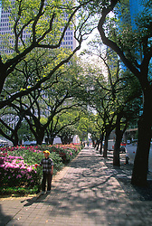 Stock photo of an oak tree lined sidewalk in downtown Houston, Texas