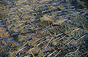 DEFORESTATION STORMS, France. Europe. St Dizier and Chaumont  area. Haut Marne, Champagne Ardenne. Hurricane force winds uprooted millions of  trees across Europe. Dry weather followed  by heavy rain made the roots vulnerable.  Winds of 100-200kmh swept through the land  causing havoc. Hundreds of millions of trees were knocked down.