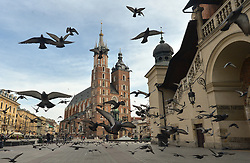 March 16, 2020, Krakow, Poland: A flock of pigeons seen in Krakow's empty Market Square. With a total of 156 confirmed cases of coronavirus and over 800 hospitalized, the country is putting its citizens on 'lockdown.' (Credit Image: © Artur Widak/NurPhoto via ZUMA Press)