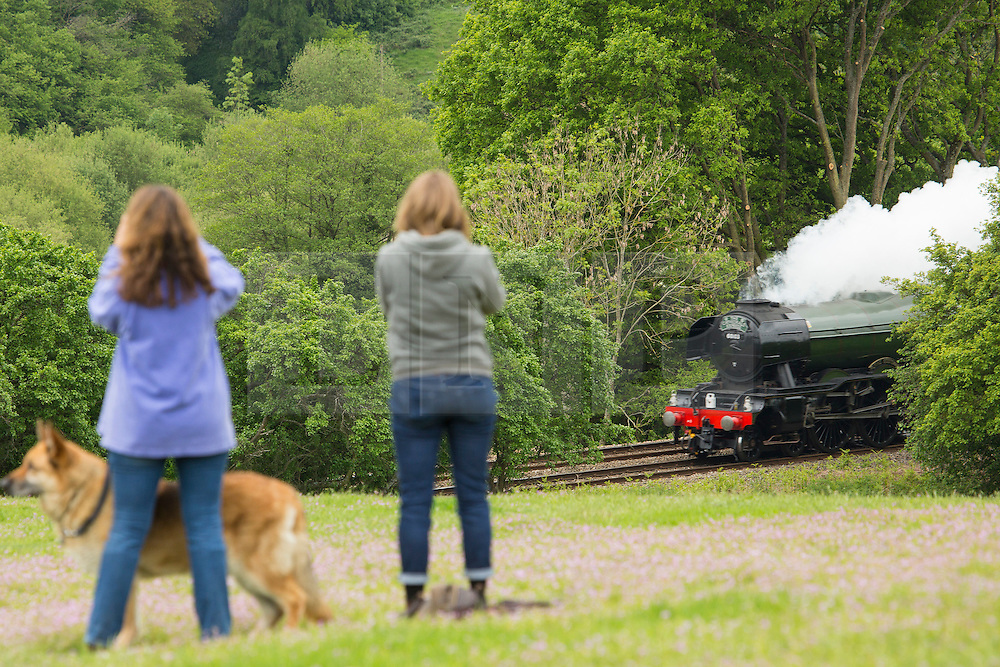 © Licensed to London News Pictures. 25/05/2016. World famous steam locomotive Flying Scotsman seen in the Surrey Hills today. The excursion took the much-loved train from London Victoria down to Guildford, Dorking, Reigate and Redhill before returning to the capital. Credit: Rob Powell/LNP