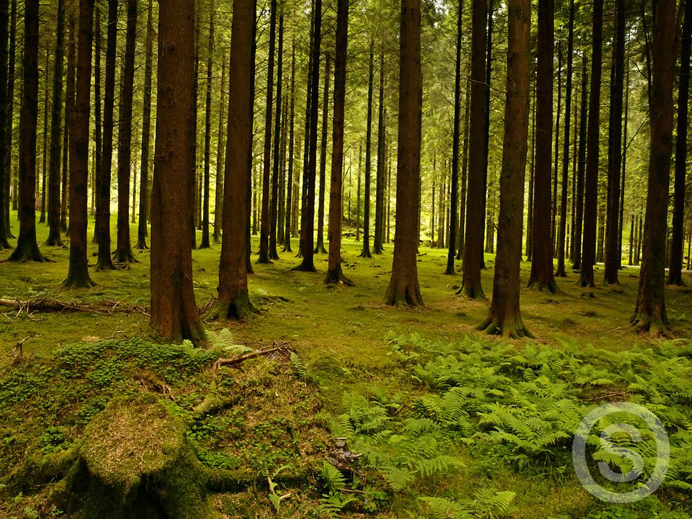 Photographer: Chris Hill, Guagan Barra Forest Park, Cork